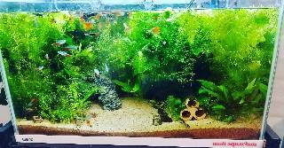 f:id:moti_aquarium:20210413064903j:plain