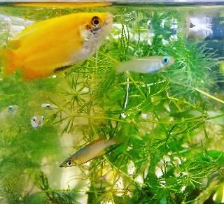 f:id:moti_aquarium:20210414064555j:plain