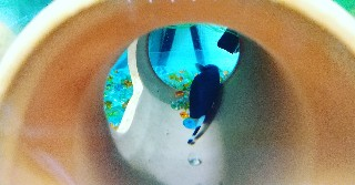 f:id:moti_aquarium:20210415124024j:plain
