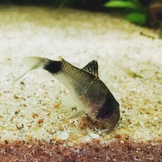 f:id:moti_aquarium:20210416070325j:plain