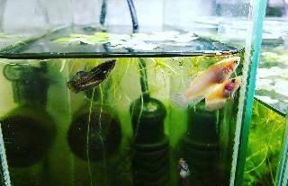 f:id:moti_aquarium:20210424185951j:plain