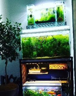 f:id:moti_aquarium:20210428081549j:plain