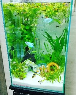f:id:moti_aquarium:20210430212153j:plain