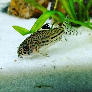 f:id:moti_aquarium:20210501082030j:plain
