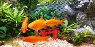 f:id:moti_aquarium:20210505085847j:plain