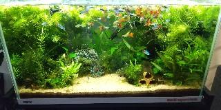 f:id:moti_aquarium:20210506063744j:plain