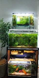 f:id:moti_aquarium:20210508092302j:plain