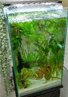 f:id:moti_aquarium:20210518080005j:plain