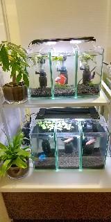 f:id:moti_aquarium:20210520070032j:plain