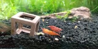 f:id:moti_aquarium:20210521070147j:plain