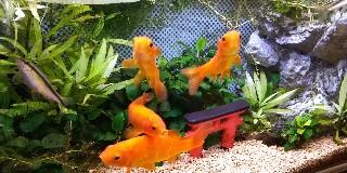 f:id:moti_aquarium:20210522074552j:plain