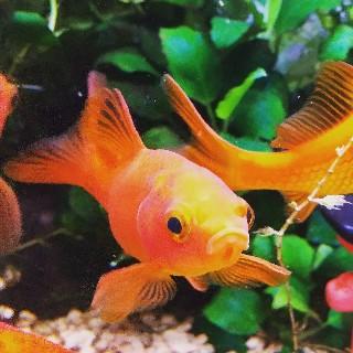 f:id:moti_aquarium:20210526065256j:plain