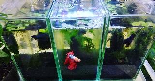 f:id:moti_aquarium:20210528190830j:plain