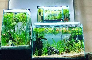 f:id:moti_aquarium:20210530192837j:plain