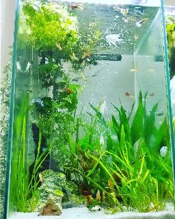 f:id:moti_aquarium:20210603070404j:plain