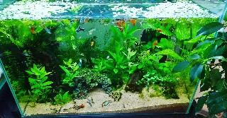 f:id:moti_aquarium:20210609072031j:plain