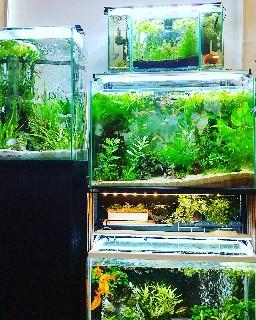 f:id:moti_aquarium:20210612062729j:plain