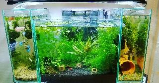 f:id:moti_aquarium:20210616065701j:plain