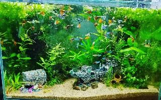 f:id:moti_aquarium:20210618184517j:plain