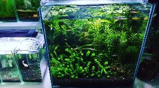 f:id:moti_aquarium:20210619104539j:plain