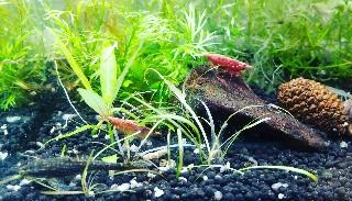 f:id:moti_aquarium:20210730064912j:plain