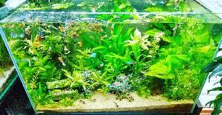 f:id:moti_aquarium:20210802054631j:plain