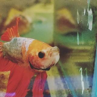 f:id:moti_aquarium:20210804051802j:plain