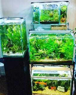 f:id:moti_aquarium:20210805062704j:plain