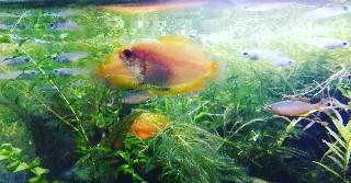 f:id:moti_aquarium:20210915074803j:plain