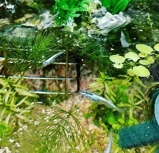 f:id:moti_aquarium:20210917092122j:plain