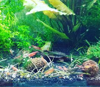 f:id:moti_aquarium:20210918083748j:plain