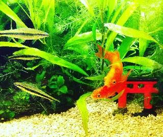 f:id:moti_aquarium:20210921063223j:plain