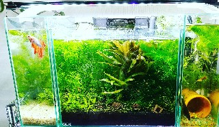 f:id:moti_aquarium:20211019065934j:plain
