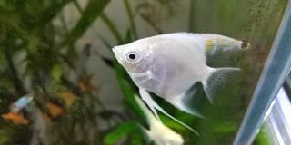 f:id:moti_aquarium:20211023084500j:plain