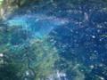 20120809青池