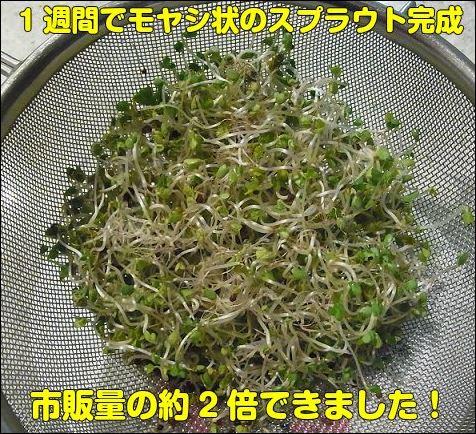 f:id:mouhatarakitakunai:20190419231952j:plain
