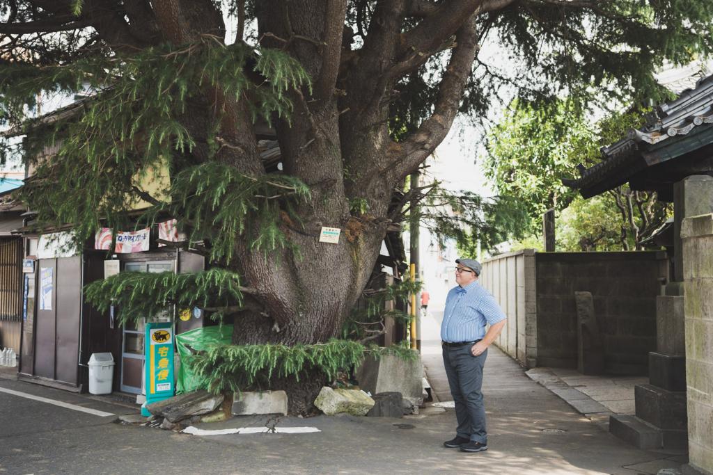 文京区根津にオフィスがあるセインさんは、通称「谷根千」エリアを熟知。セインさんにご案内いただき、近所を散策しました。こちらは谷中のシンボルとも言えるヒマラヤスギの大木。