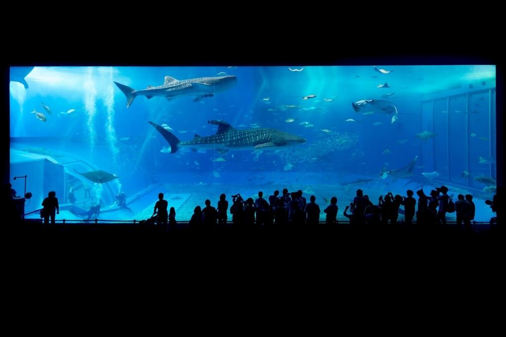 水族館からサメが盗まれた!誰も思いつかなかったその手口とは?英語多読ニュース