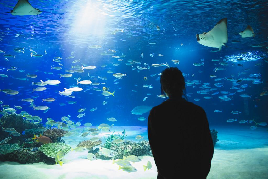 サンシャイン水族館(Sunshine Aquarium)