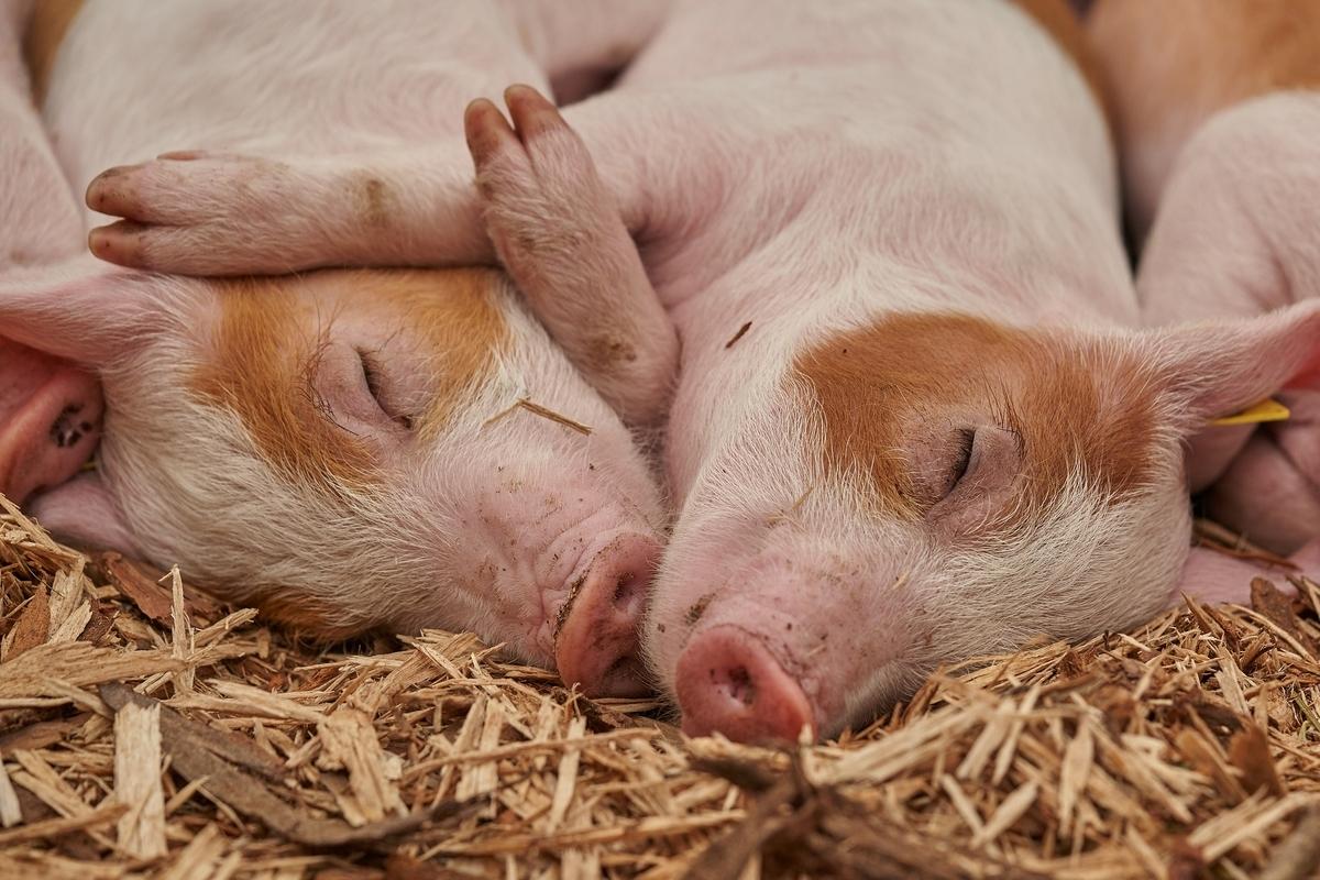 昼間、眠くて仕方ない人が質の良い睡眠を取る方法【英語多読ニュース】