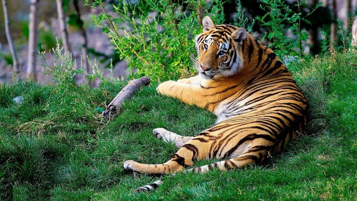 I hope we are lucky enough to see a wildtiger from our safari bus.