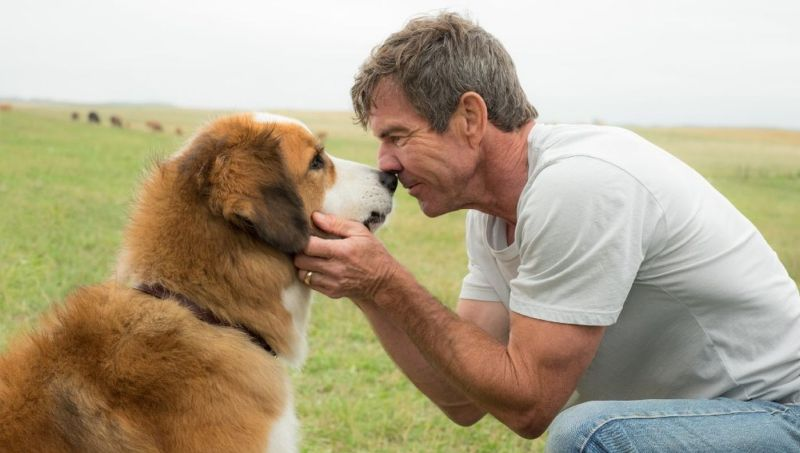 watch a dogs journey online free 123movies