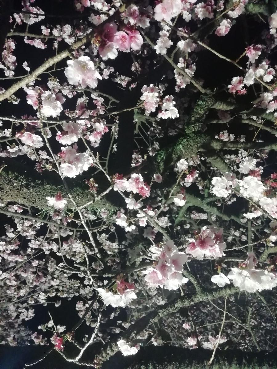 f:id:moyashidaisuke:20190127223540j:plain
