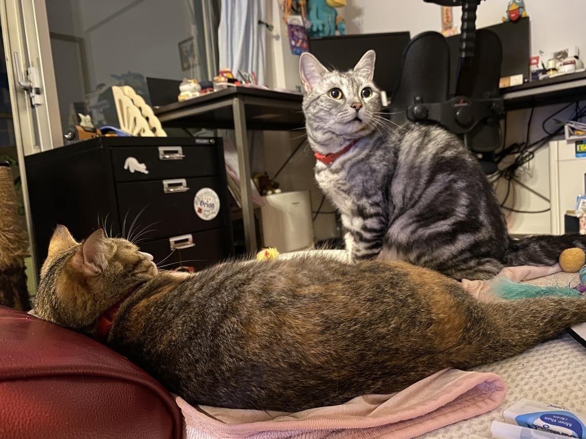 出汁のいい匂いに反応する猫