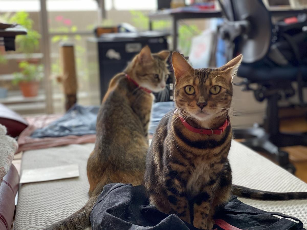 お出迎えする猫たち