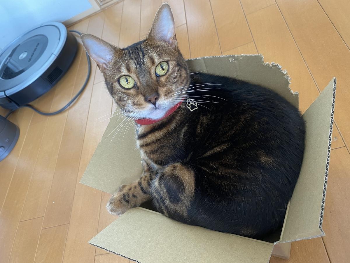 箱に入るココ