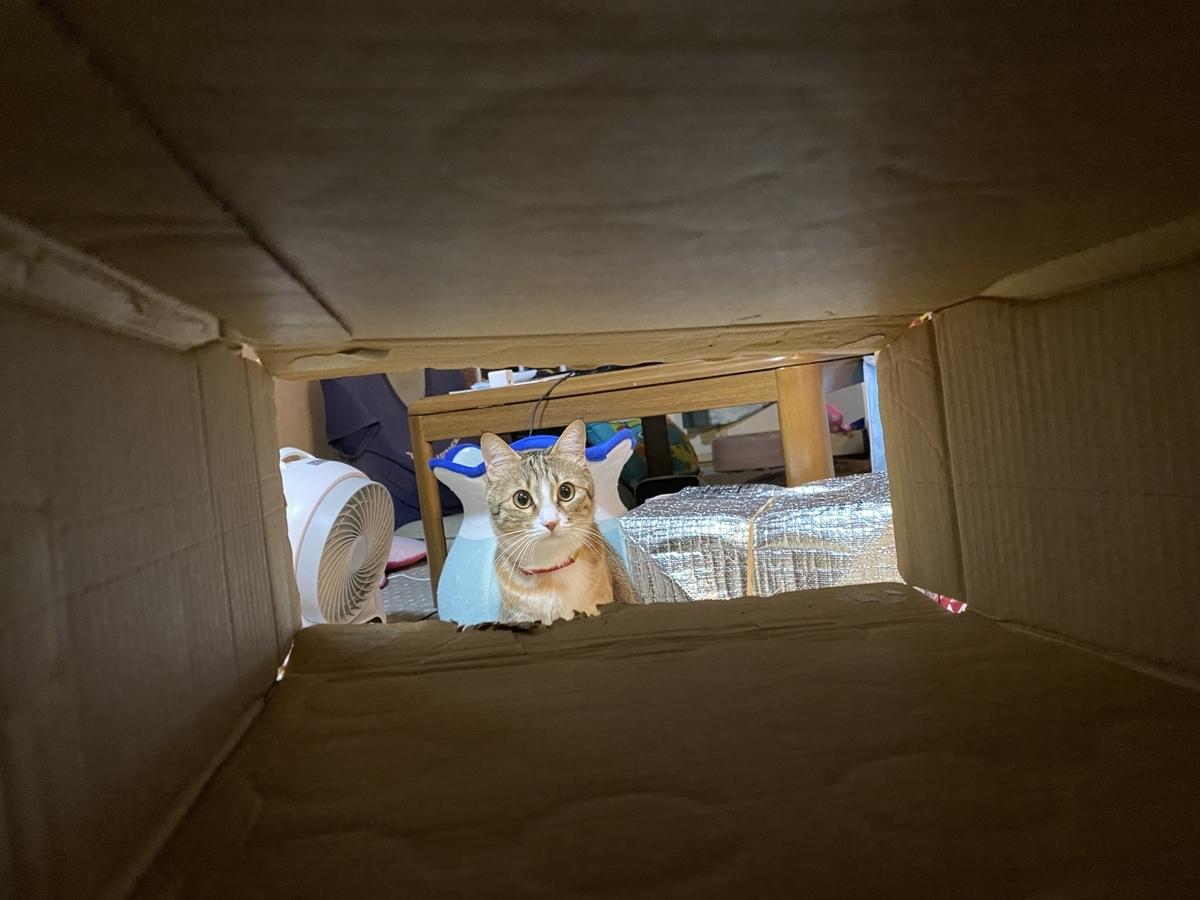 箱から見た虎春