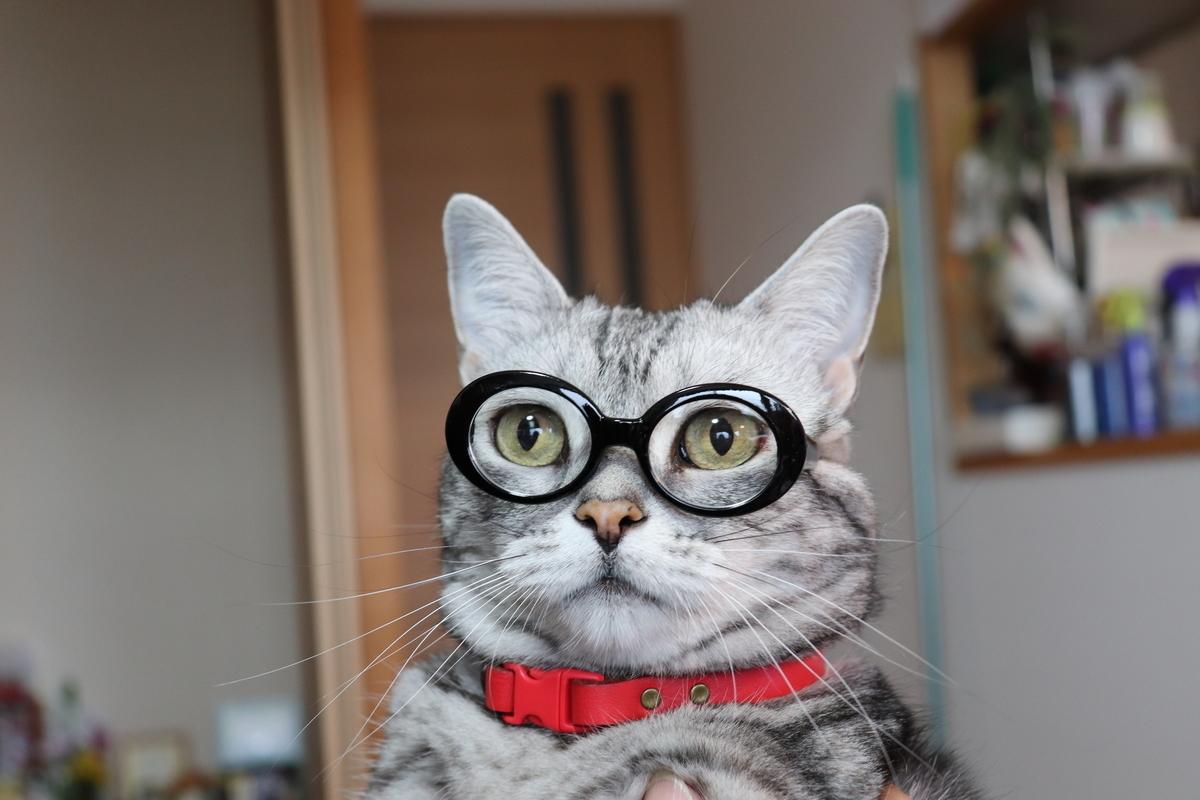 メガネが似合うリン