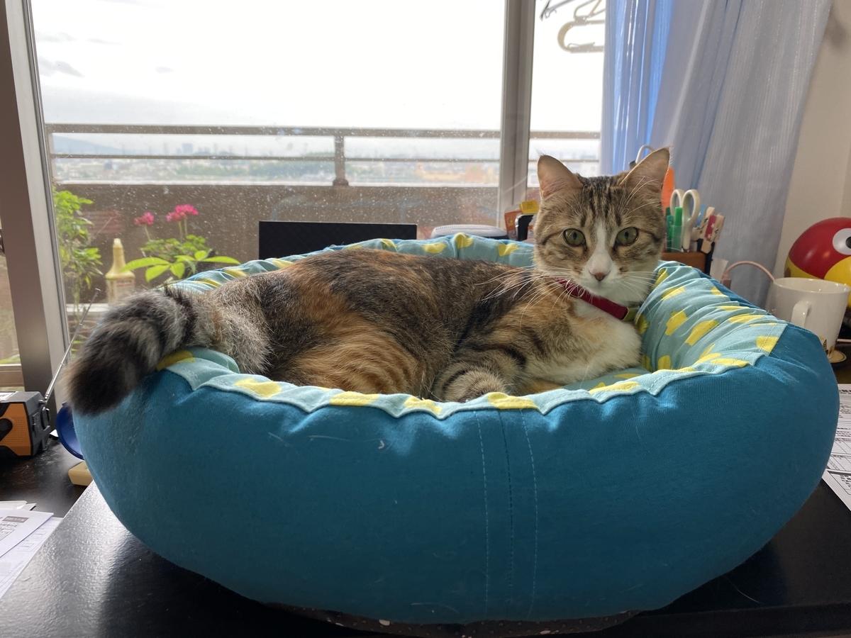 虎春のために買ったベッド