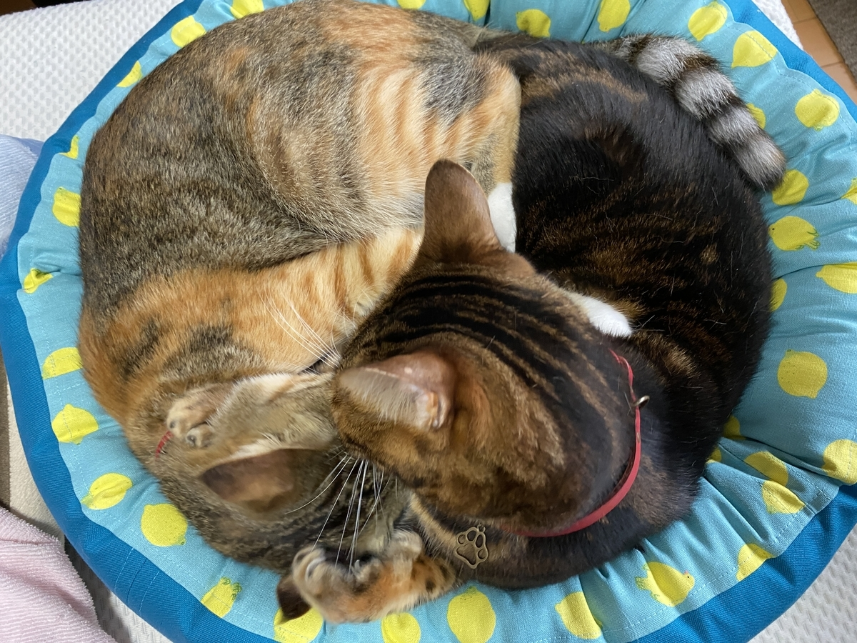 仲良く寝てるココと虎春。